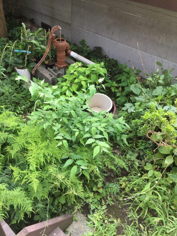 Gasshuの庭